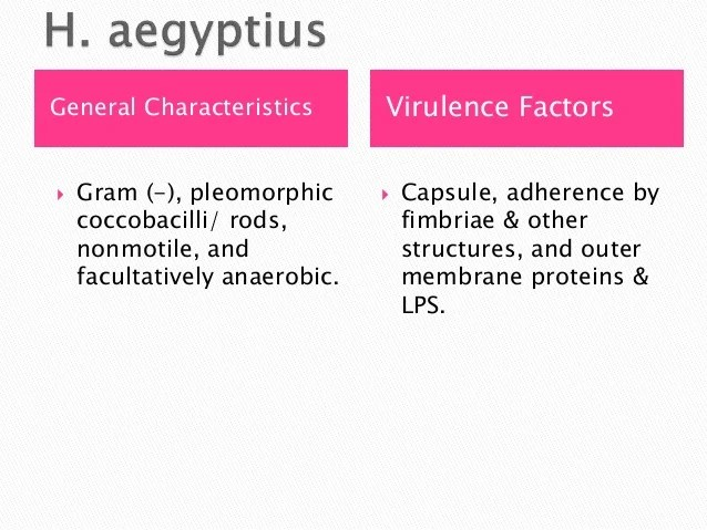 Contagious Infections Anaerobic