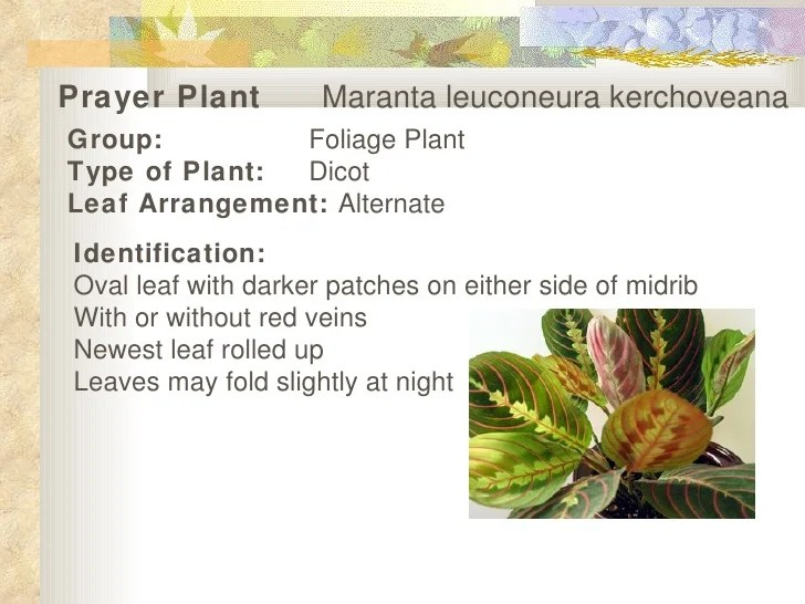 Plants Types Different Prayer
