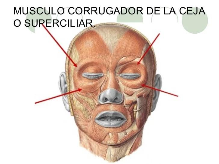 La máscara para que blanquea para las caras