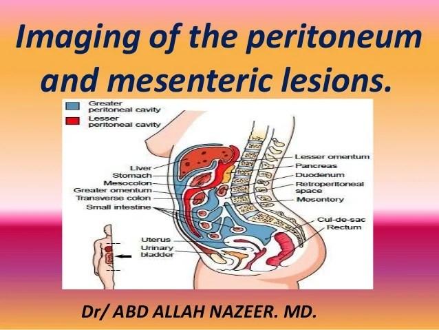 Anatomy Of Peritoneum And Peritoneal Cavity