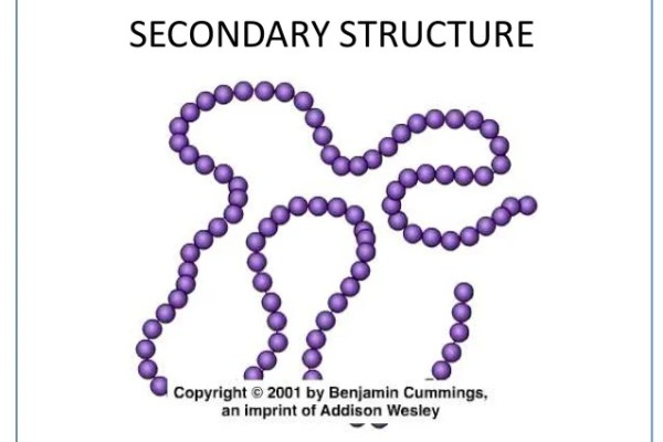 Secondary Structure of Proteins