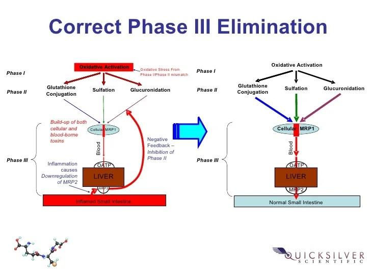 Image result for liver detox 3 phases quicksilver