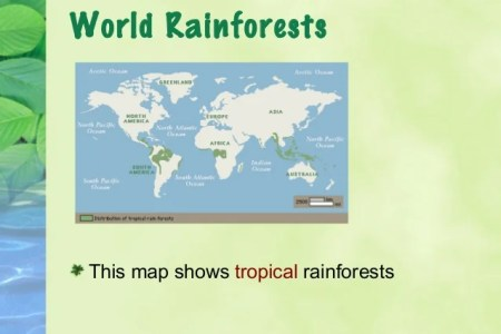 Map rainforests of the world 4k pictures 4k pictures full hq a blank world maps for students to the distribution new map reveals astronomical scale of human impact on forests map of tree densities across the world gumiabroncs Gallery