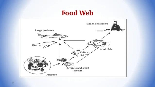 Bathypelagic Food Web