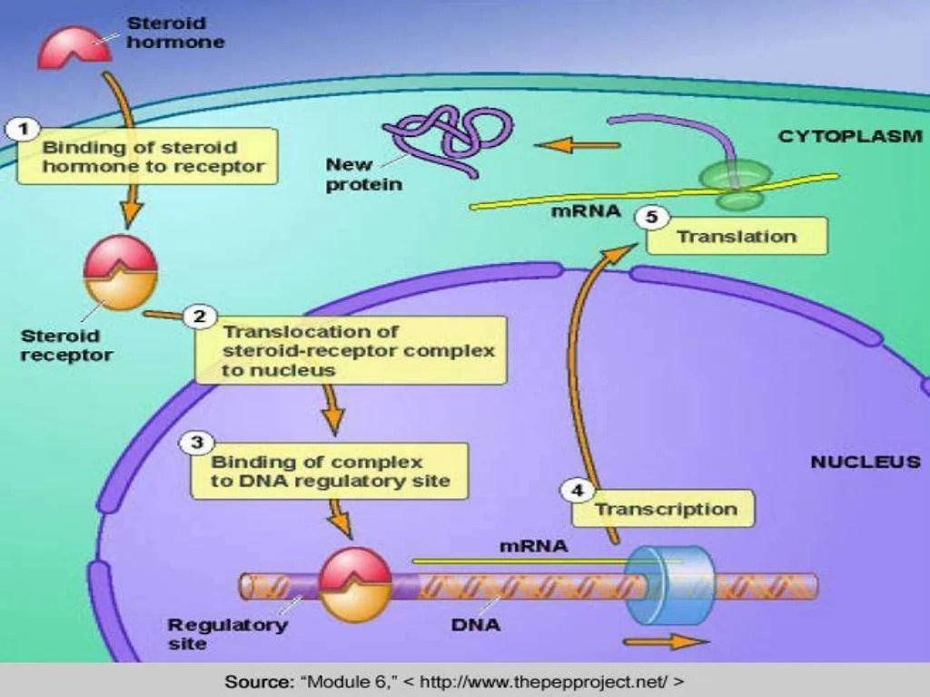Regulation Of Gene Expression Ppt