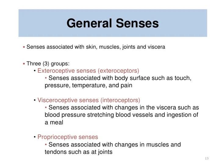 General Sense Receptors