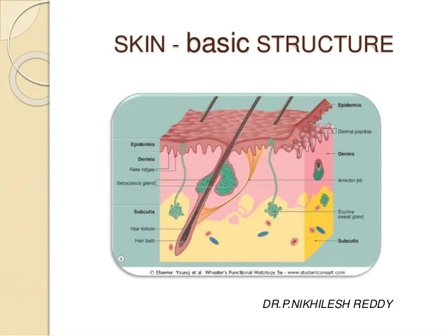Skin structure and development