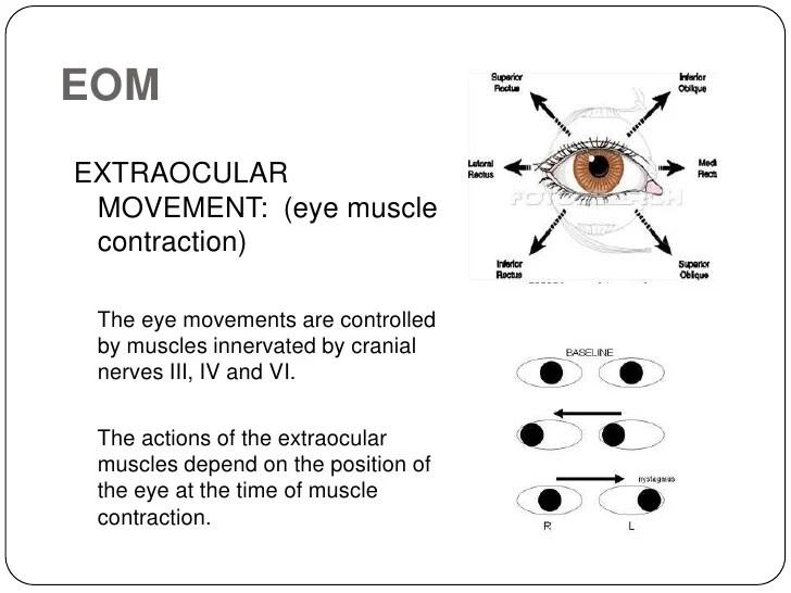 Eye Movements Extraocular Nerves