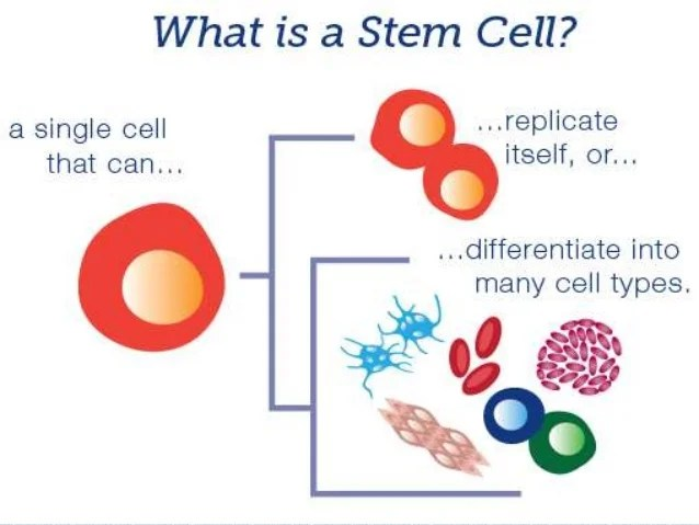 Image result for stem cell therapy