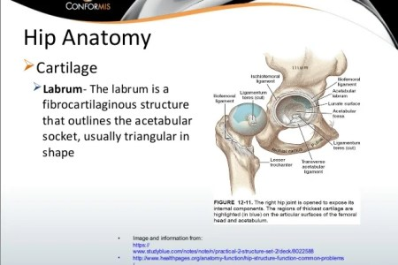 Interior Anterior Labrum Hip Full Hd Maps Locations Another