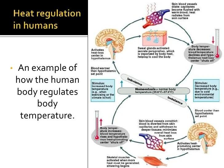 Thermoregulation and osmoregulation (bd)