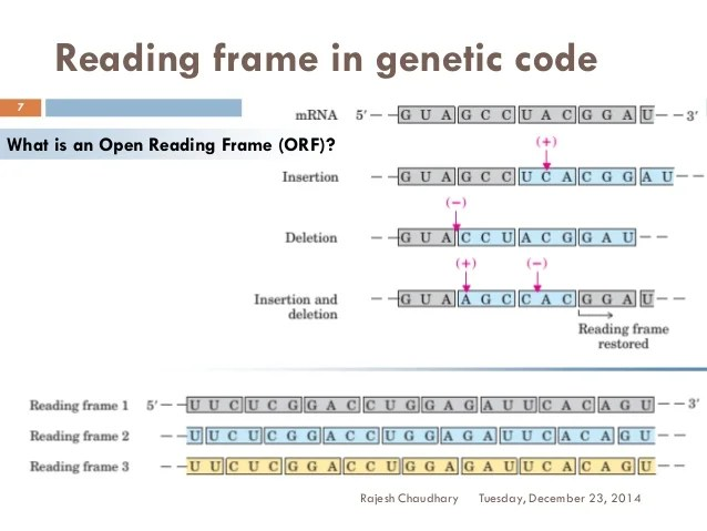 mrna open reading frame | Frameswalls.org