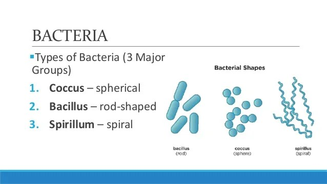 Bacteria Quiz And Virus