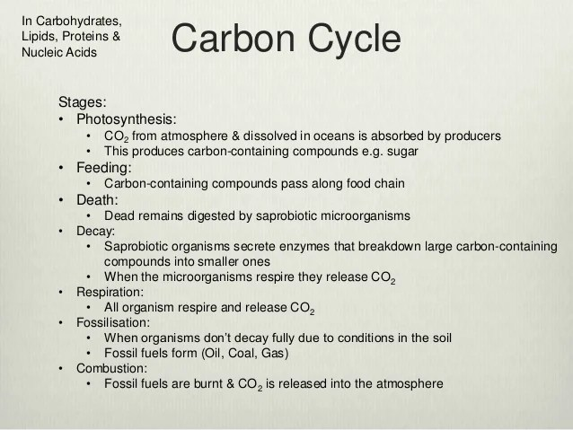 Carbohydrates Carbon Chem