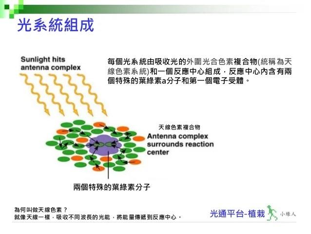 入門篇 植栽第二十二講-光合作用之葉綠素-V1