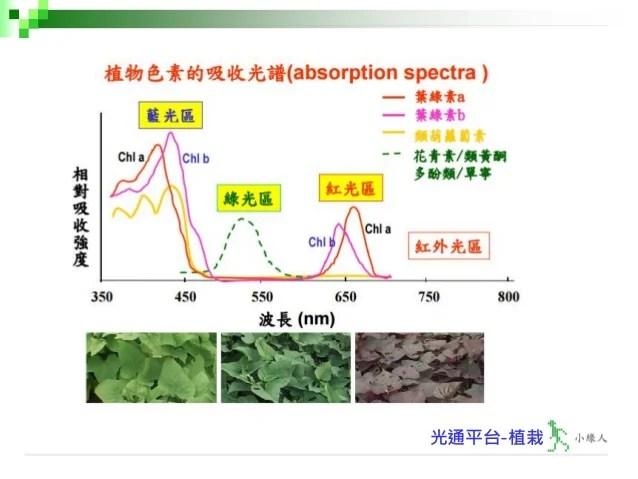 入門篇 植栽第二十三講-光合作用之原理-V2