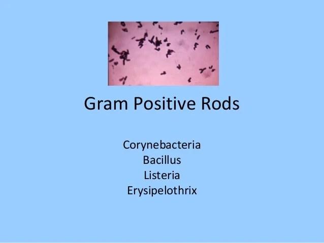 Sputum Culture Gram Positive Rods