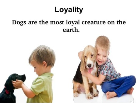 why dogs are the best