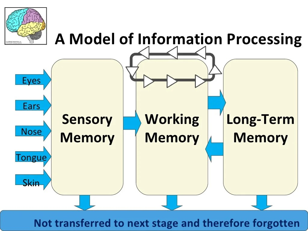 Sensory Memory Long Term Memory Working