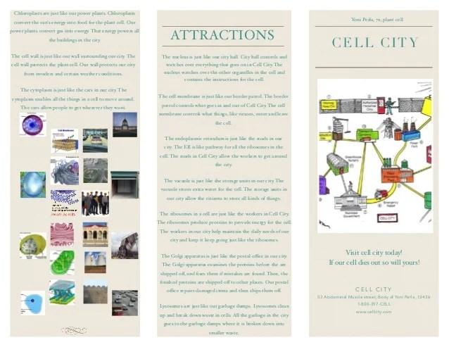 Animal Cell Brochure Amusement Park