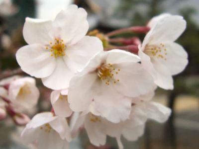 オオクワ京都昆虫館 お店の出来事 sakura