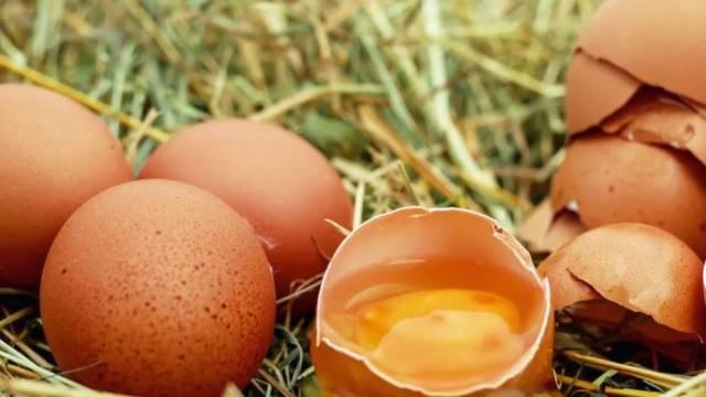 Lebensmittelskandal: Salmonellengefahr: Rewe, Aldi und Penny rufen Eier zurück