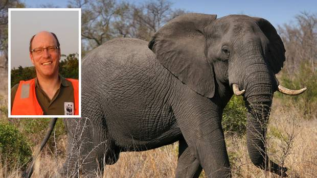 An elephant in Africa and Africa, referee of the WWF Johannes Kirchgatter