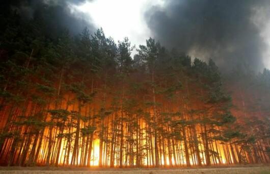 Incendiu de padure - Dolginino, Rusia (Aug. 2010)