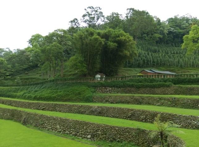43 芎林-綠色小徑 賞桐花順便來喝個茶吧