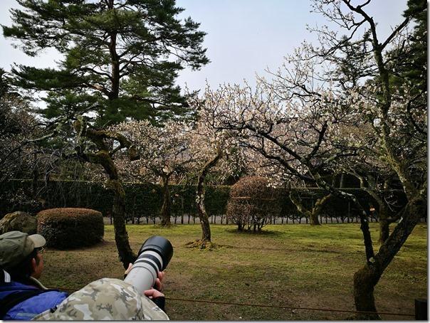 kenrokuen5021_thumb Kanazawa-日本三大名園 二訪兼六園 金澤必訪