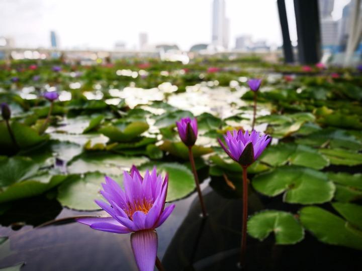 marinabay42 Singapore-Marina Bay晨景 感受新加坡最美的濱海灣