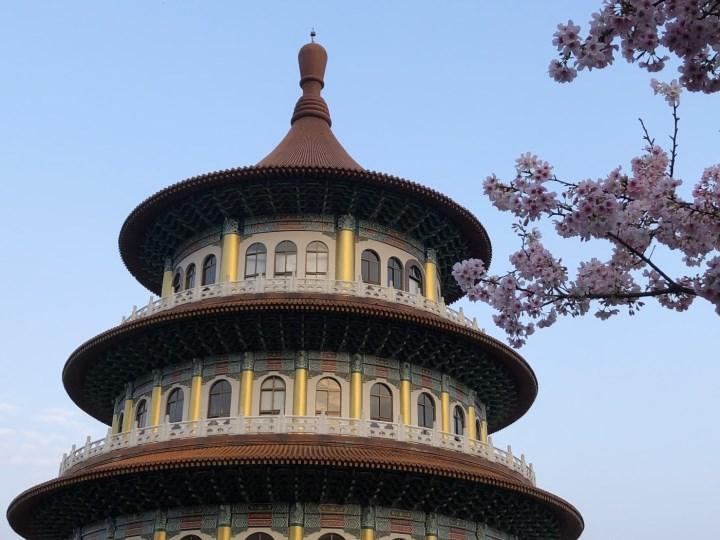 tienyuan05 淡水-晨光中綻放的櫻花 北台灣最夯賞櫻景點天元宮