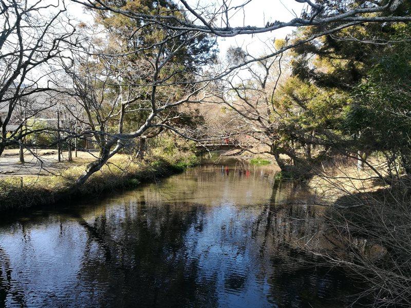kinrinko11 Yufuin-金鱗湖 由布院第一美景 飄渺夢幻的小池塘