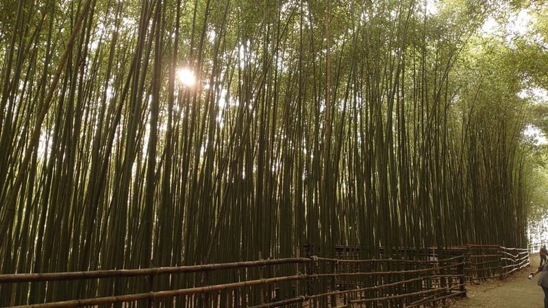 wugayen13 泰安-烏嘎彥竹林 台版嵐山竹林秘境
