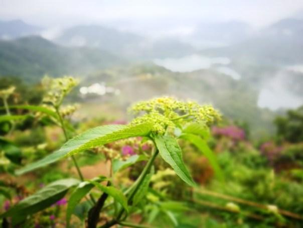 damtaipei070108 石碇-美景如畫...其實是美的不像話 秘境石碇千島湖(翡翠水庫)