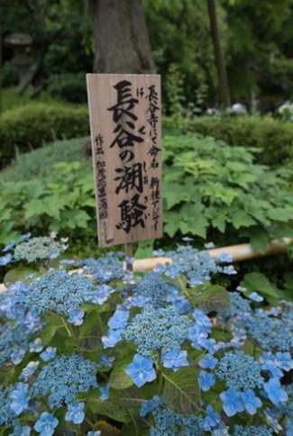 flowertemple04 Kamakura-鎌倉長谷寺 紫陽花季人山人海啊