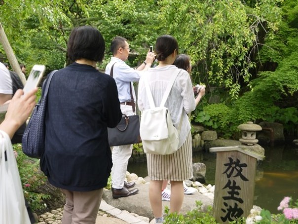flowertemple07 Kamakura-鎌倉長谷寺 紫陽花季人山人海啊