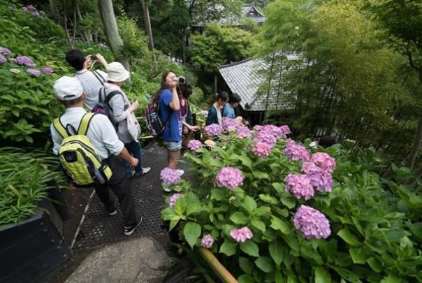 flowertemple50 Kamakura-鎌倉長谷寺 紫陽花季人山人海啊