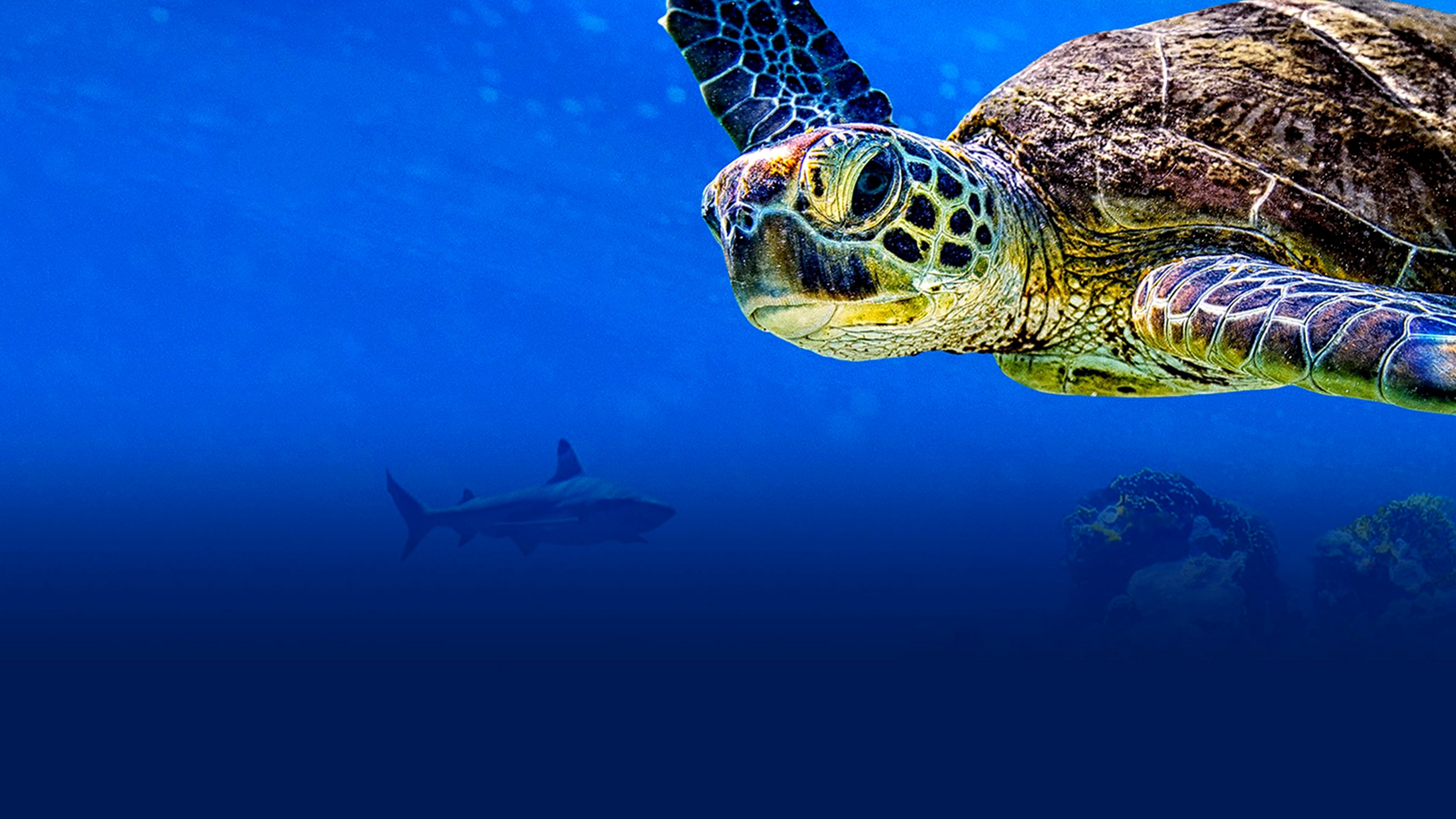 Watch Turtle Odyssey Full Movie