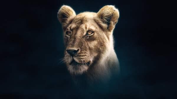 lion king online sa prevodom # 20