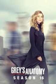 Grey's Anatomy 16ª Temporada