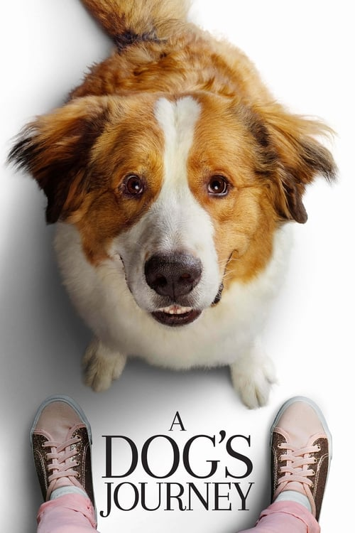 A Dog's Journey Full Movie Download Link Leaked By Filmywap, Filmywap 2021, Filmyzilla 2021, Hdfriday, Isaimini 2021