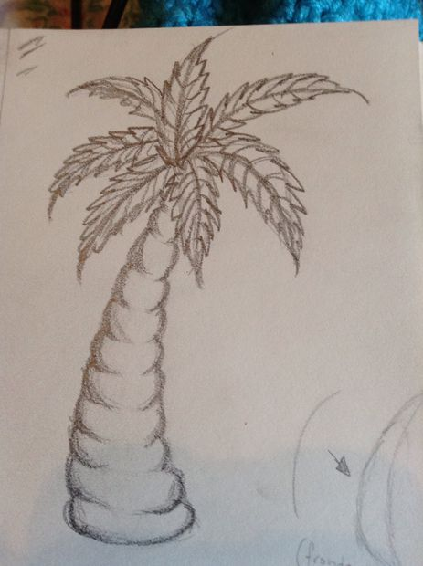Comment Dessiner Un Palmier Tubefr Com