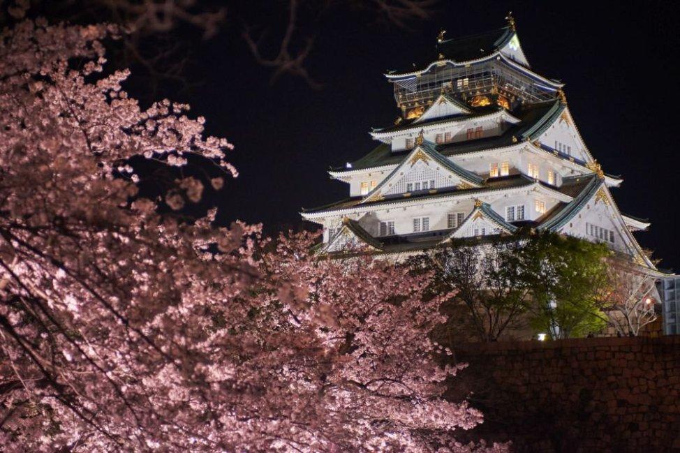 「2019大阪城公園のお花見 」の画像検索結果