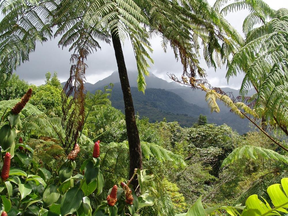 papua yeni gine yağmur ormanları ile ilgili görsel sonucu