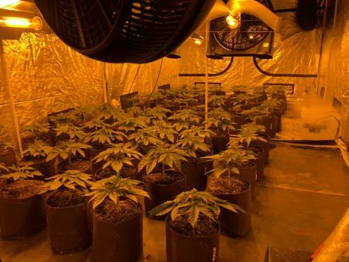 a brioude il faisait pousser 80 plants de cannabis dans son garage