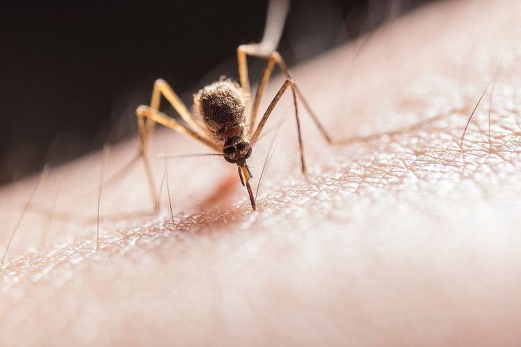 選購捕蚊燈前注意事項