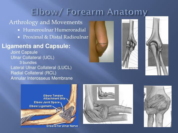 PPT - Pathomechanics of elbow) PowerPoint Presentation ...