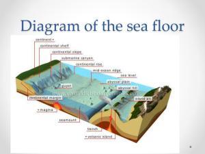 PPT  Parts of the Ocean Floor PowerPoint Presentation
