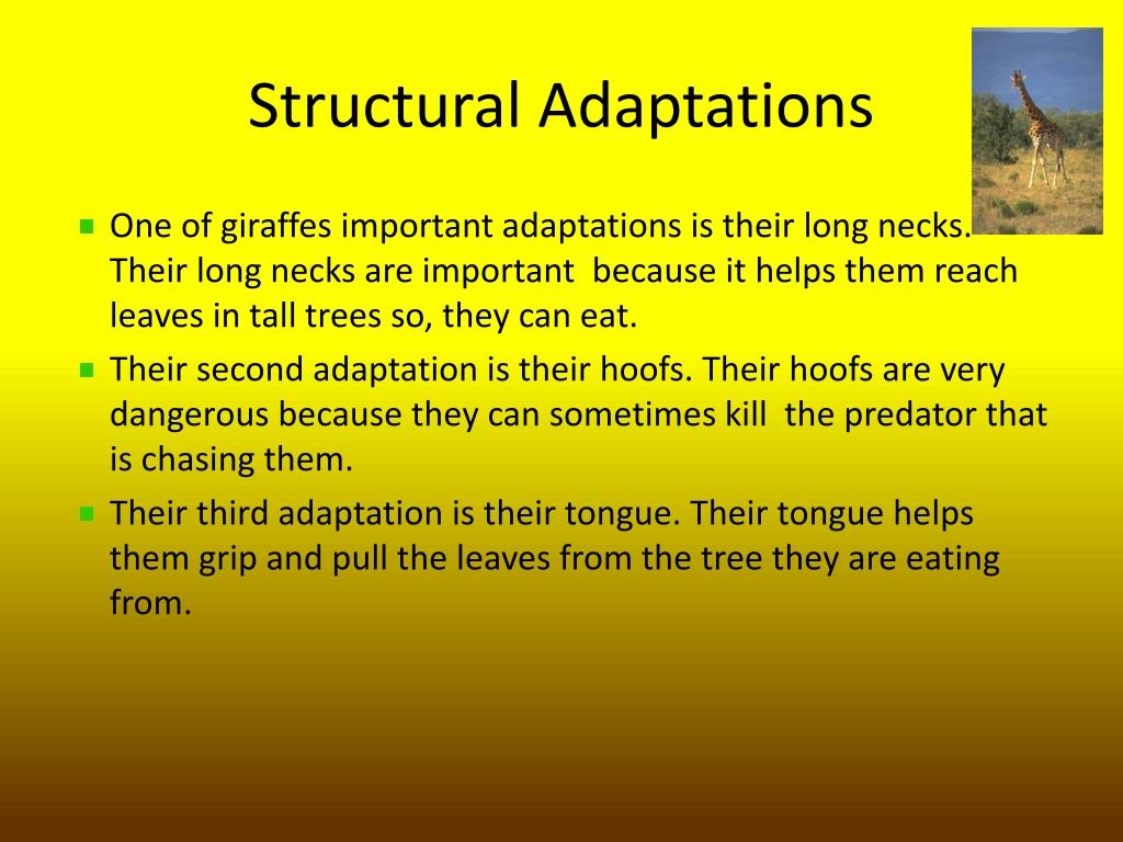 Http Www Structural Adaptation